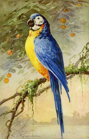 Chromolithograph of a parrot