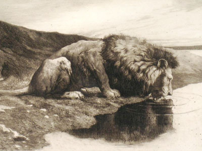 A Lion Drinking
