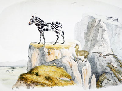 The Modern Zebra and The Klipspringer