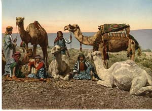 Bedouin and their camels