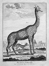 La Giraffe; Le Chevotin by Denis Diderot 1751