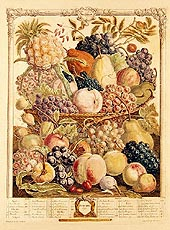 Copper Engraving from Twelve Months of Fruit by Robert Furber, 1732