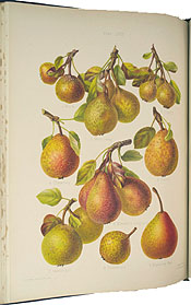 Herefordshire Pomona, Containing Coloured Figures and Descriptions of the Most Esteemed Kinds of Apples and Pears by Robert Hogg