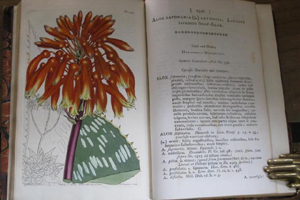 The Botanical Magazine by William Curtis - sold for $15,592