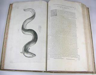 Aquatilium animalium historiae, liber primus, cum eorundem formis, aere excusis by Ippolito Salviani