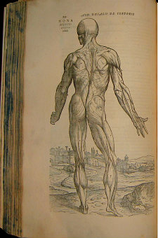 "The 1555 second edition of De humani corporis fabrica (or ""The Fabrica"" by Andreas Vesalius"