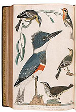 American Ornithology Or, the natural history of the birds of the United States by A. Wilson