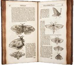 Insectorvm sive Minimorum Animalium Theatrvm
