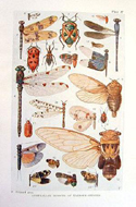 The Insects of Australia and New Zealand by R.J. Tillyard