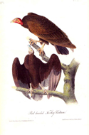 Birds of America by John James Audubon