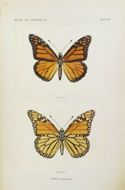 Moths and Butterflies of the United States East of the Rocky Mountains by Sherman F Denton