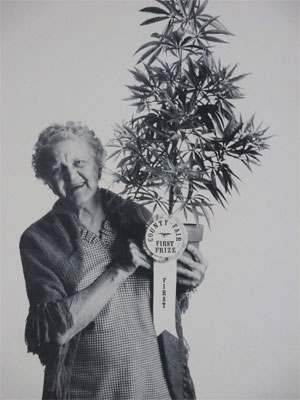 First Prize Grandma with Marijuana Plant Poster 1971
