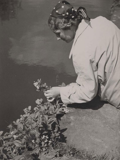 In 1940, a woman picks flowers.